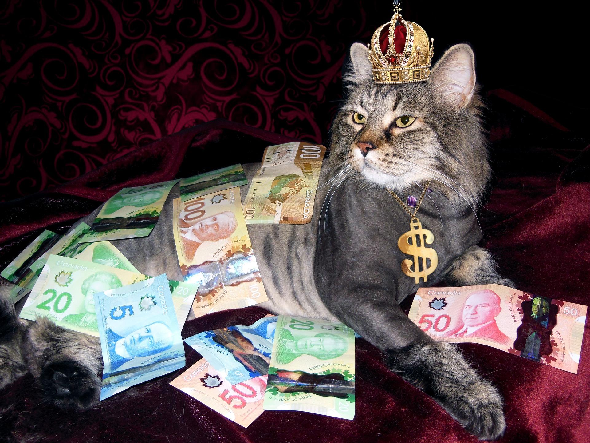 website 1144553 kat met geld