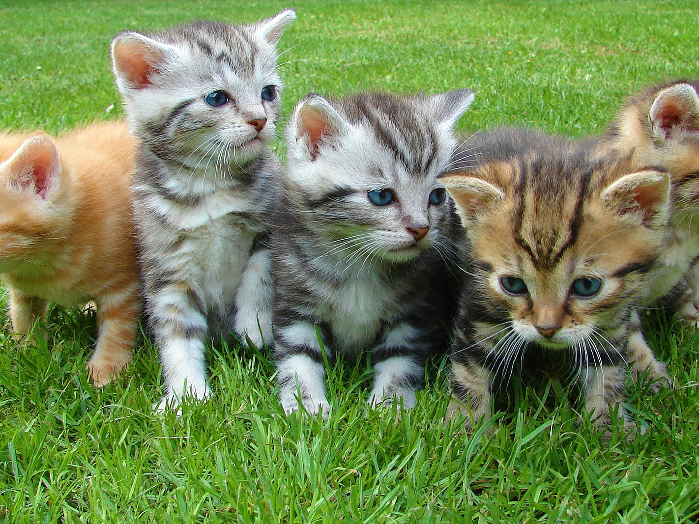 website-5-kittens-555822-111