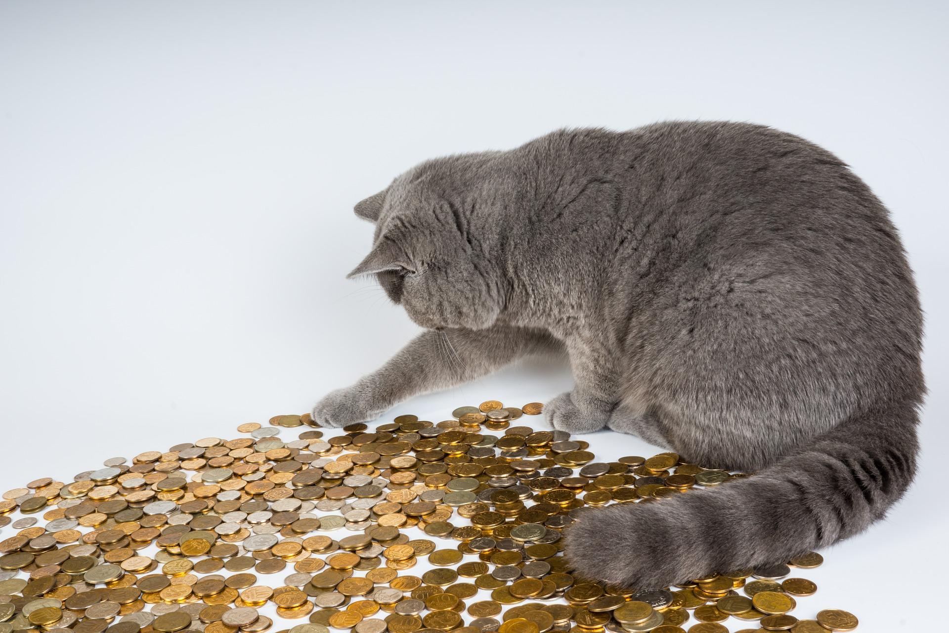 website 602944 kat geld pootje