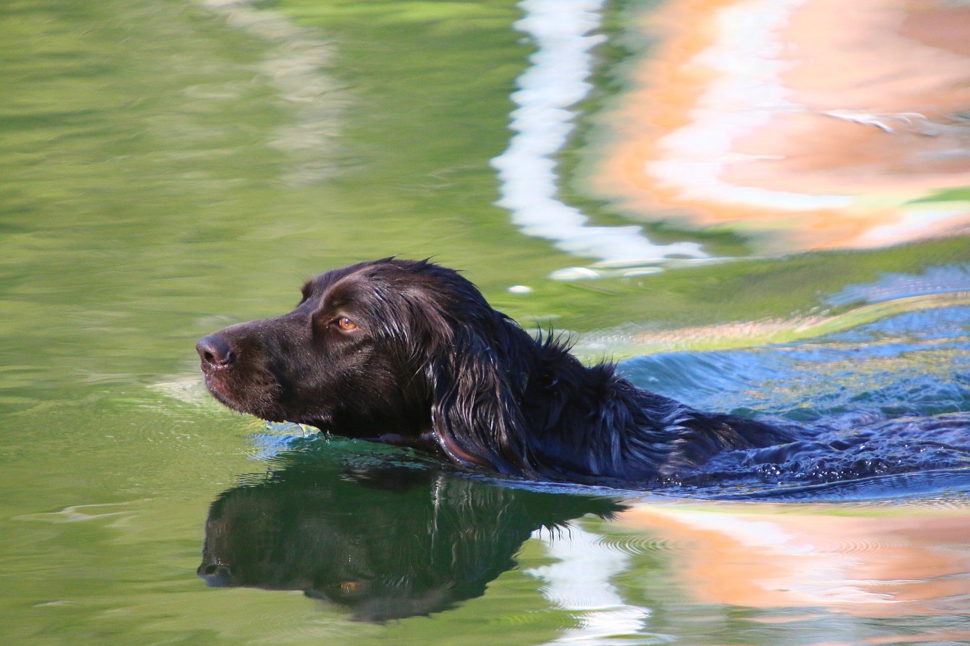 website zwemmende hond kleuren735343